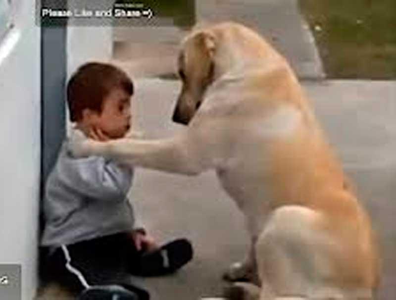 crianca-recebe-carinho-de-cao-amigo.jpg - Enviado em: 07/05/2014