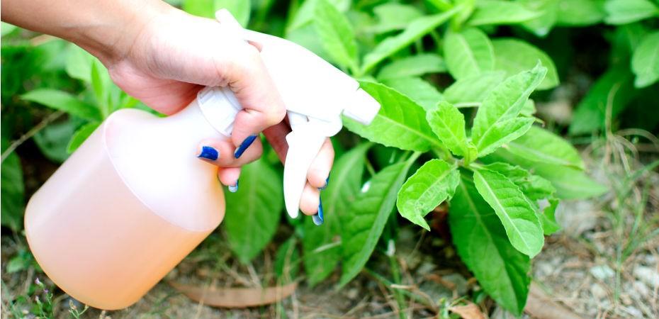 Receita de inseticida natural desenvolvida pelo IMPA