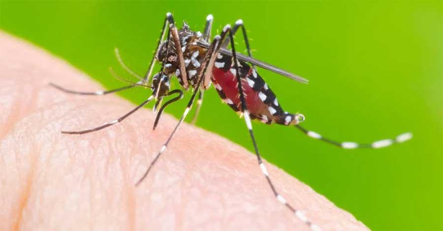 Surto de dengue em 2020